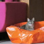 Shop & Rock Friday Gets Lost at IKEA - Maisie in bag 1