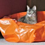 Shop & Rock Friday Gets Lost at IKEA - Maisie in bag 2
